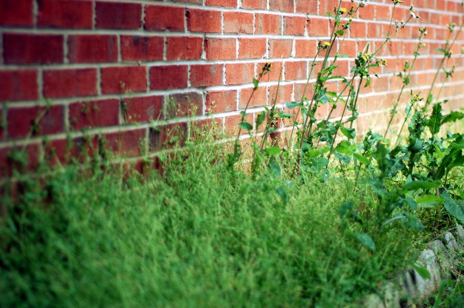 weeds against red brick wall by Andrea Badgley on Butterfly Mind